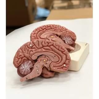 Hjernemodel i otte dele
