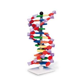DNA model - 12 lag