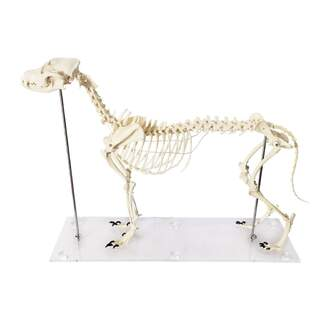 Hund knogler i plast