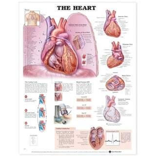 Hjertelamineret planch engelsk