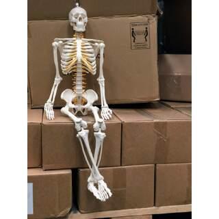Fleksibelt mini skelet 85 cm