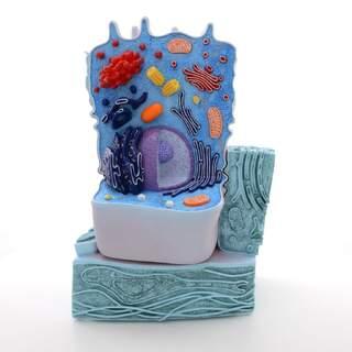dyr cell