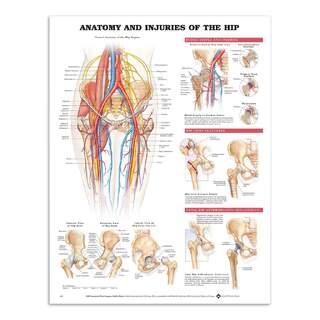 Anatomi & Skade i hofteforbindelsen på engelsk