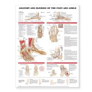 Anatomi & skader på fod- og ankellamineret plakat engelsk