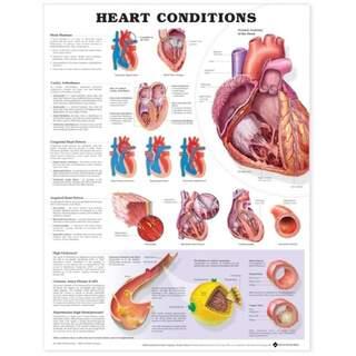 Hjertesygdom lamineret plakat