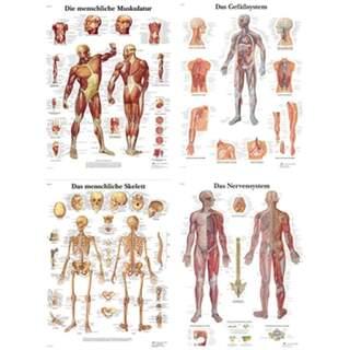 Plakatpakke - Anatomi