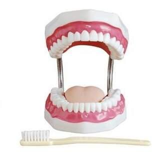 Tandpleje tandmodel