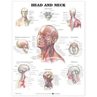 Plansch med kraniumindhold og muskler, blodkar og nerver i ansigtet og på halsen engelsk