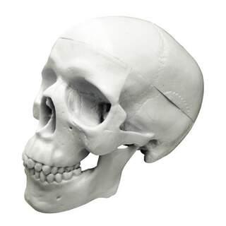 Billig Mini-kranium model i tre dele