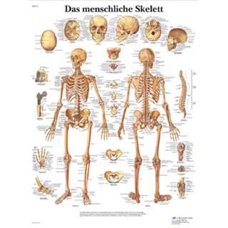 Skeletplakat ren latin 51x67 cm