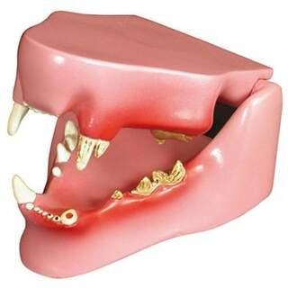 Cat Jaw med sunde og syge tænder