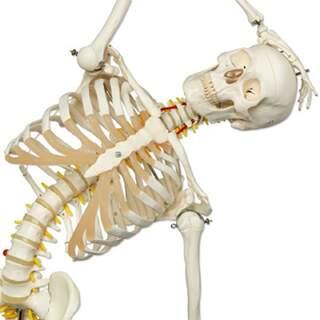 fleksibel skelet fra 3B