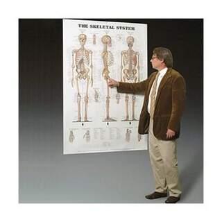 Knogler og ledbånd lamineret plakat