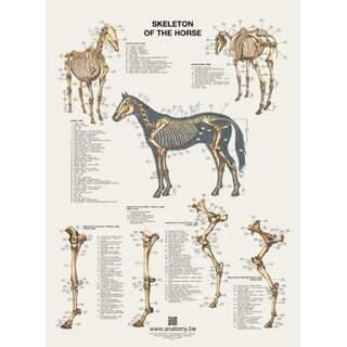 Hestens skeletplakat 60x80 cm