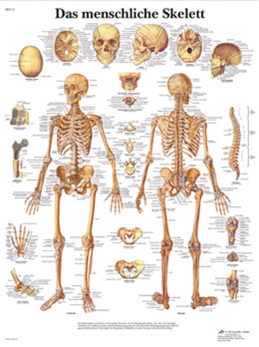 knogler latin